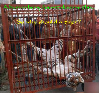 primates in circuses suffer many depravations Prohibiting the exploitation of animals for entertainment by circuses   cats, lions, bears, primates, tigers  the size of a circus, the animals often suffer.